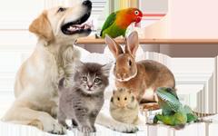 veterinarnaja_clinica_vgavm1